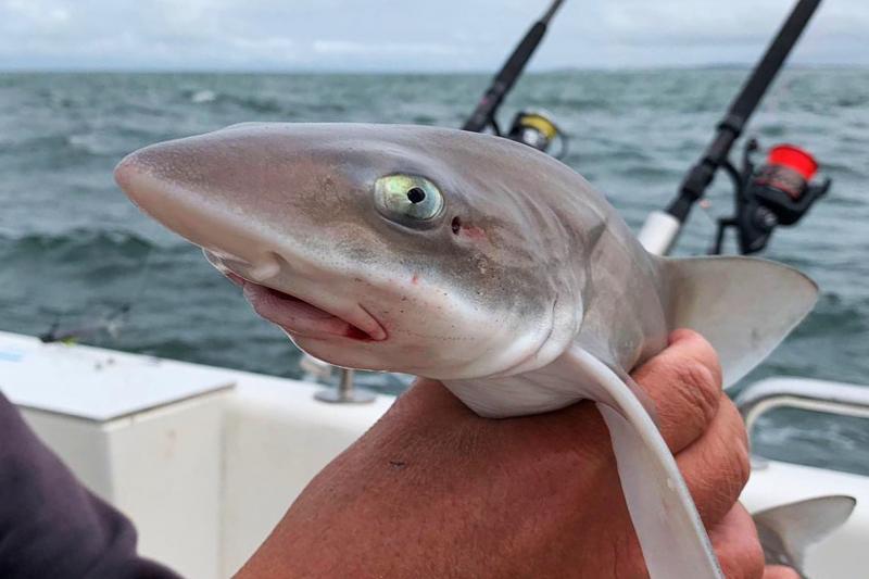 2019 Shark Atag  (43)
